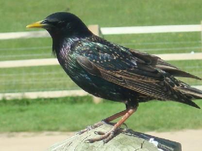 ストーンヘンジで見かけた鳥.JPG