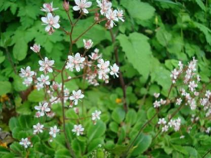 可愛い野草のような花.JPG