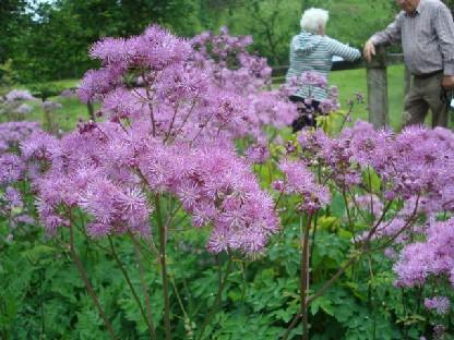 薄紫の花.JPG